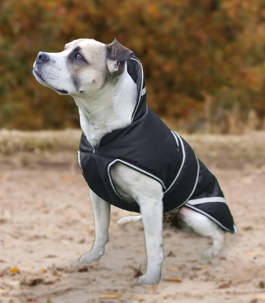 Cobrejão de cão Acolchoada